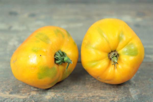 Tomate orange russe BIO - Ferme Lafouasse