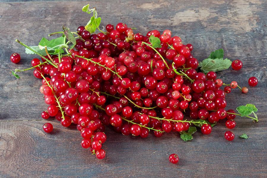 Groseilles - Les Fruits Rouges de mon Jardin - La Ruche qui dit Oui ! à la maison